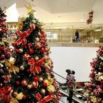"""""""The Christmas Curse"""""""