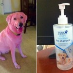 Why has Tesco shampoo turned my dog pink?